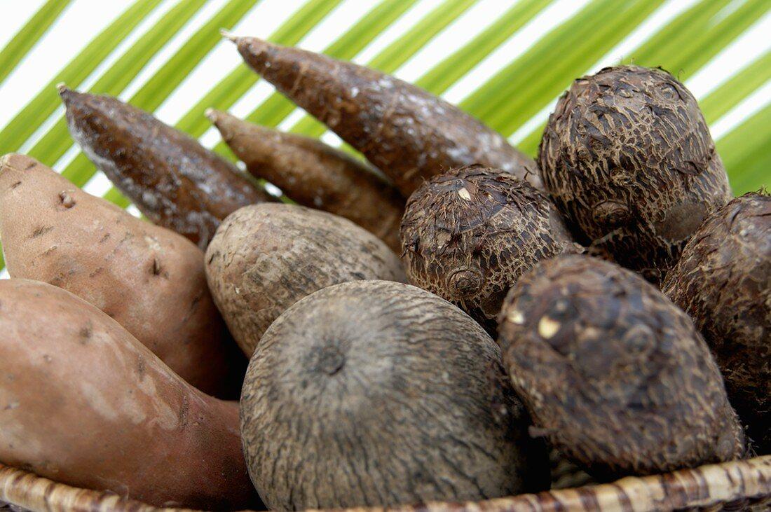 Still life with cassava & taro roots, yams & sweet potatoes