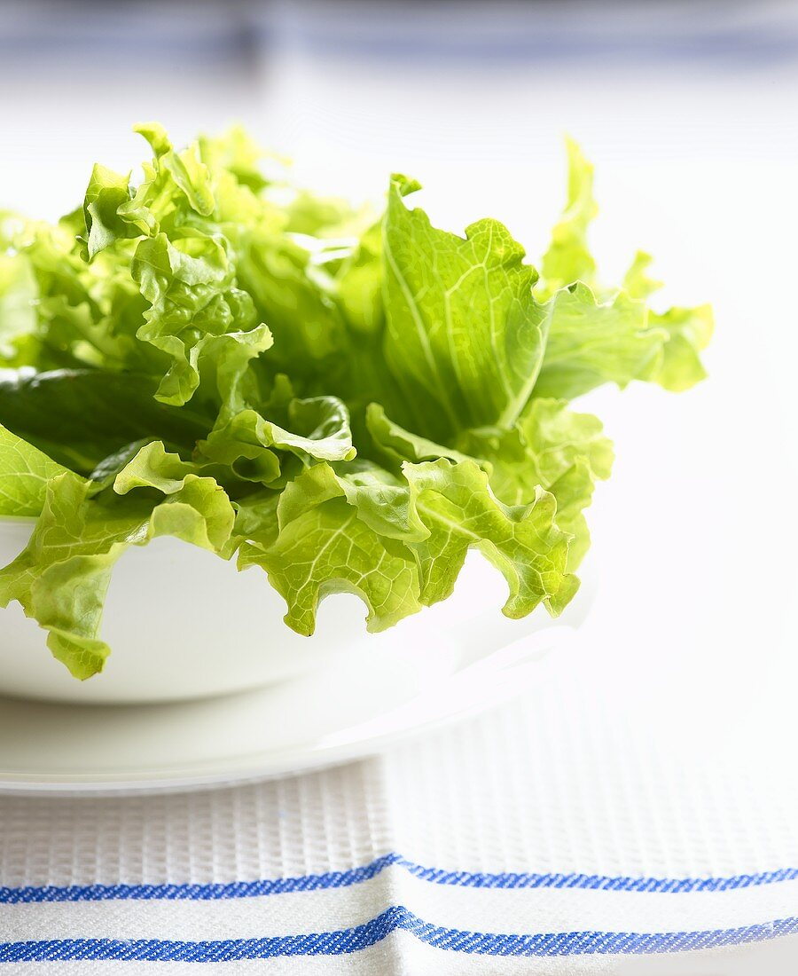 Lettuce in a bowl