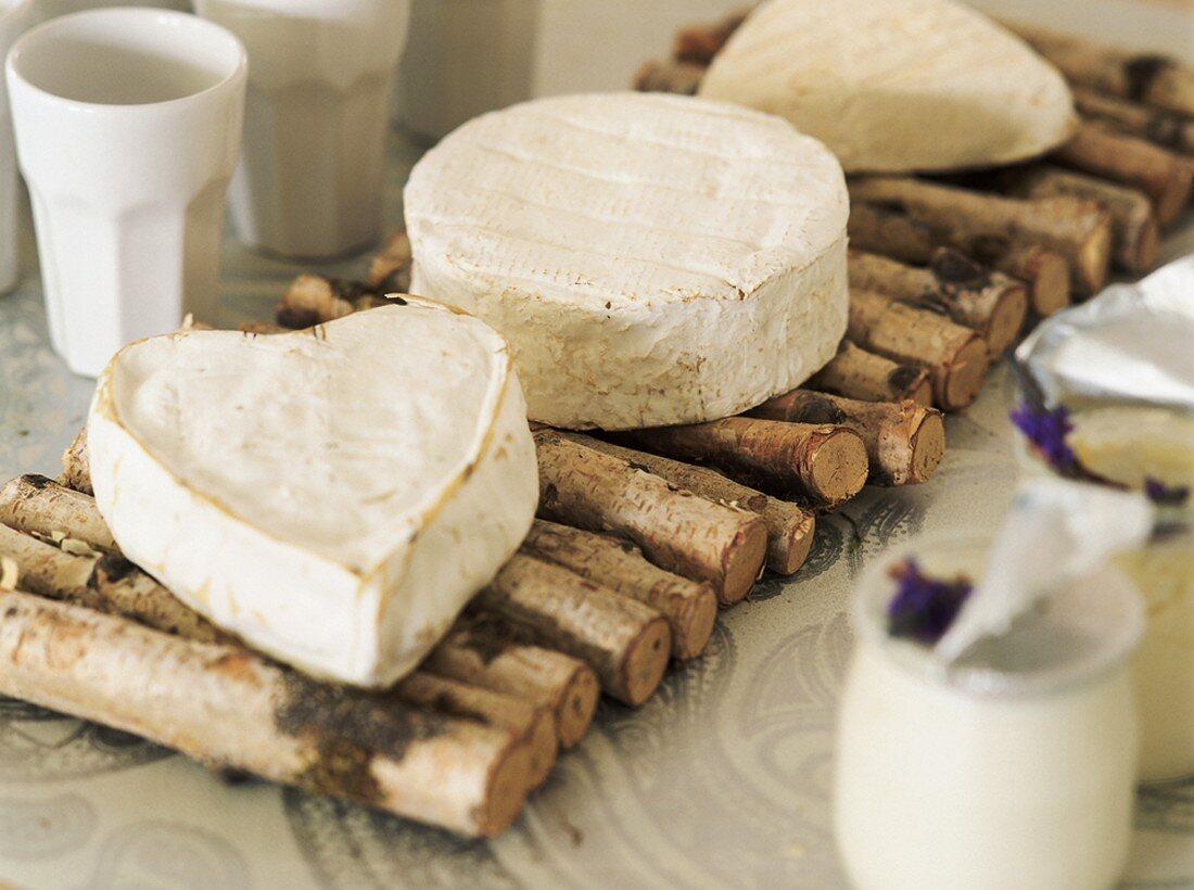 Camembert cheeses on mat made of sticks