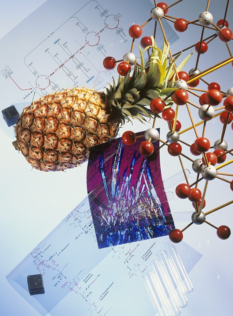 Image symbolising enzymes: pineapple, molecules, formulae