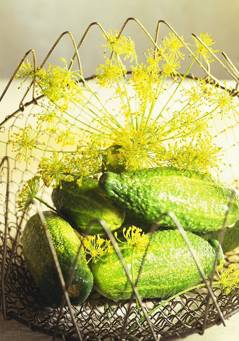 Small pickling cucumbers with dill flowers in wire basket