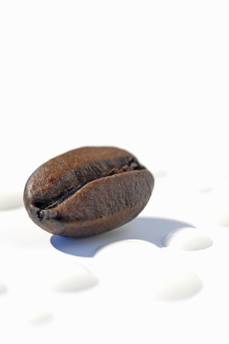 A coffee bean and milk foam