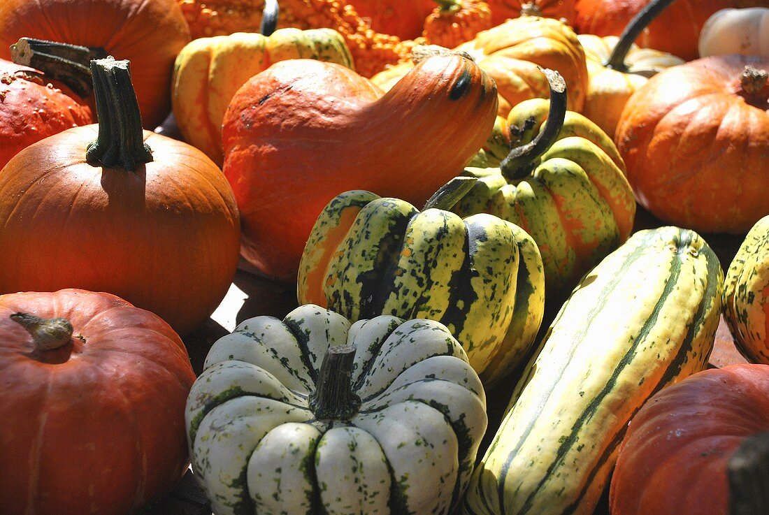 Lots of different pumpkins and squash (macro zoom)