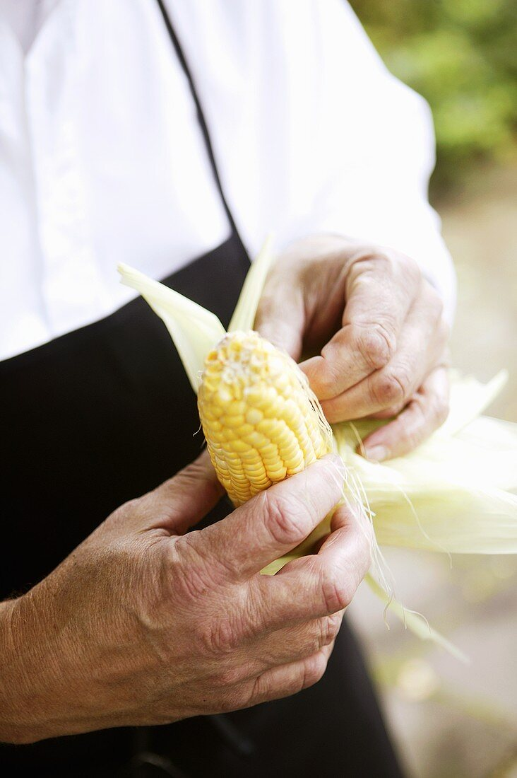 A corn cob being prepared for a barbeque