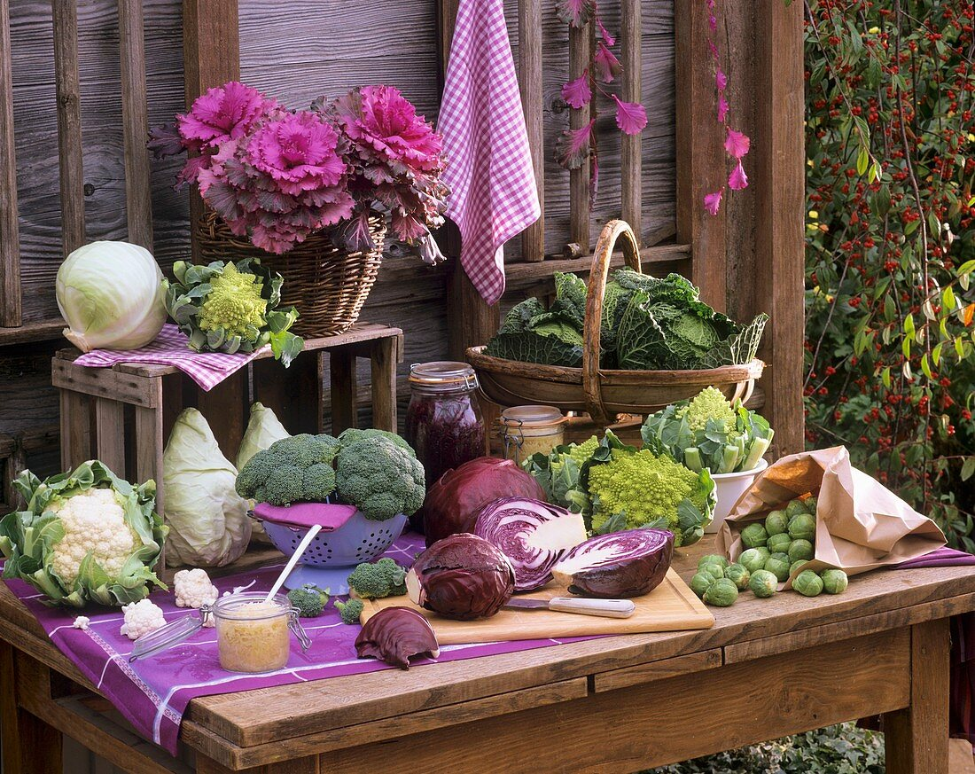 Still life with various types of brassicas out of doors