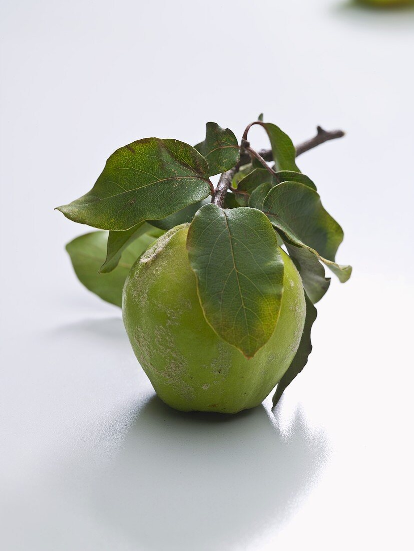 An apple with twig and leaves