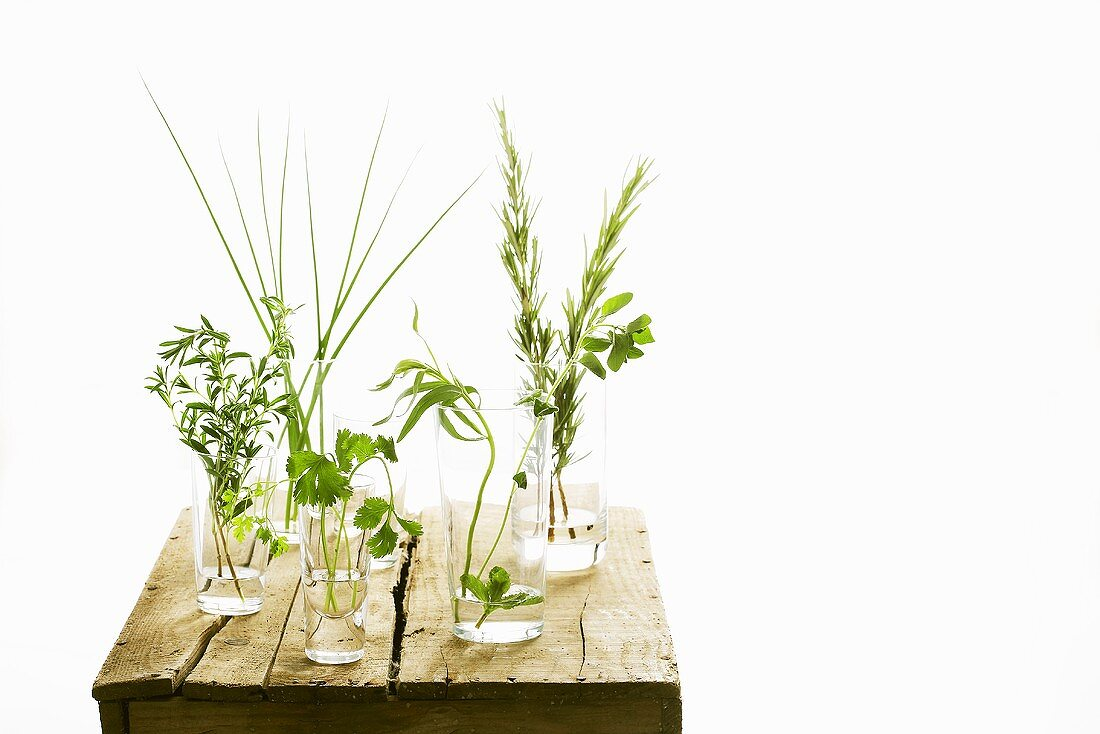 Assorted culinary herbs in glasses on a wooden board