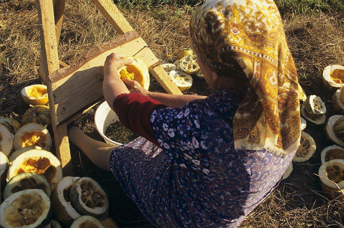 Woman harvesting pumpkin seeds in Austria