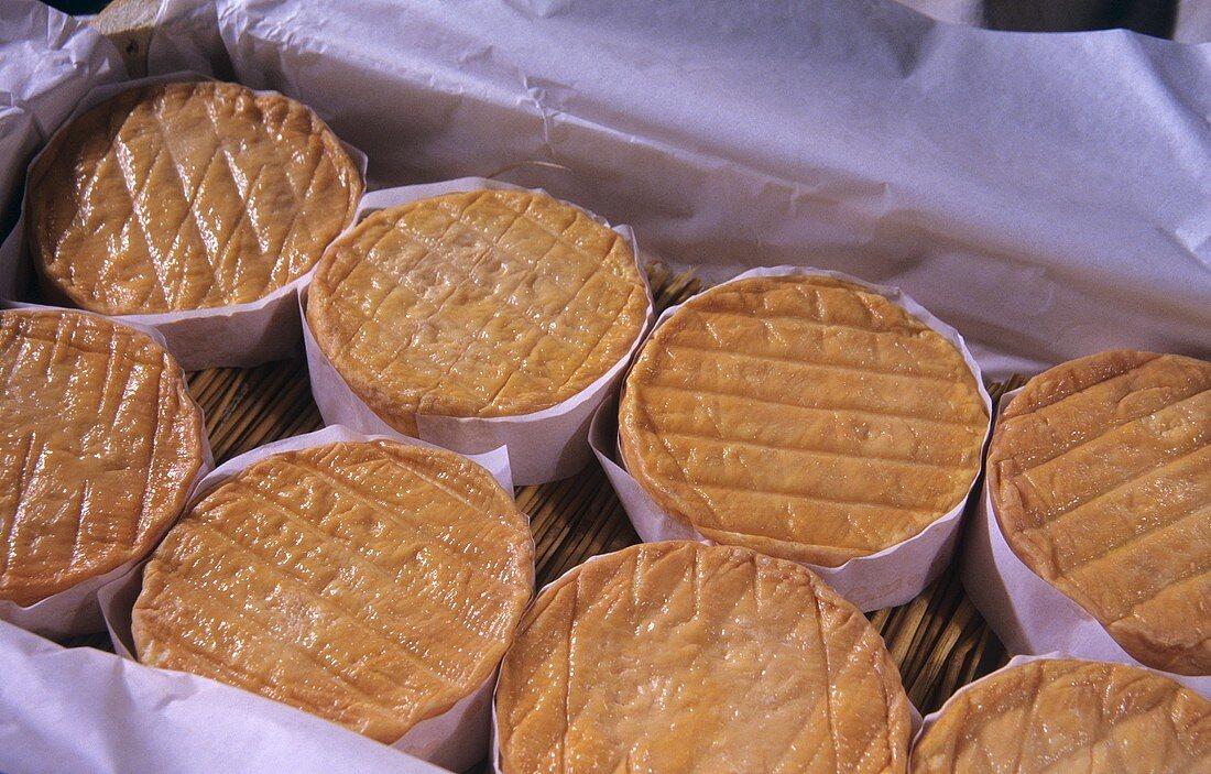 Époisses (Soft cow's milk cheese, France)
