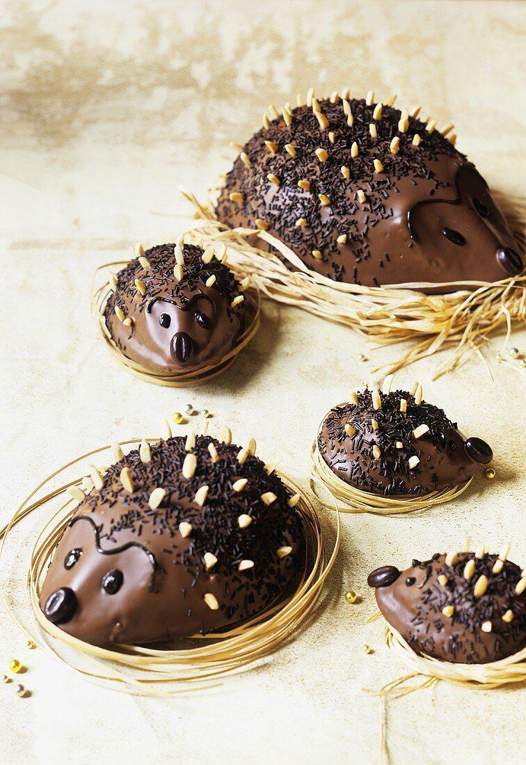 Five chocolate hedgehogs