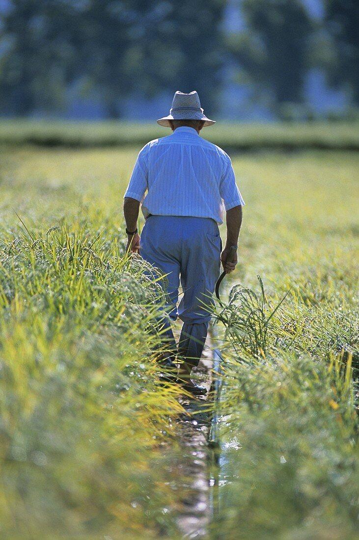 Man in a paddy field