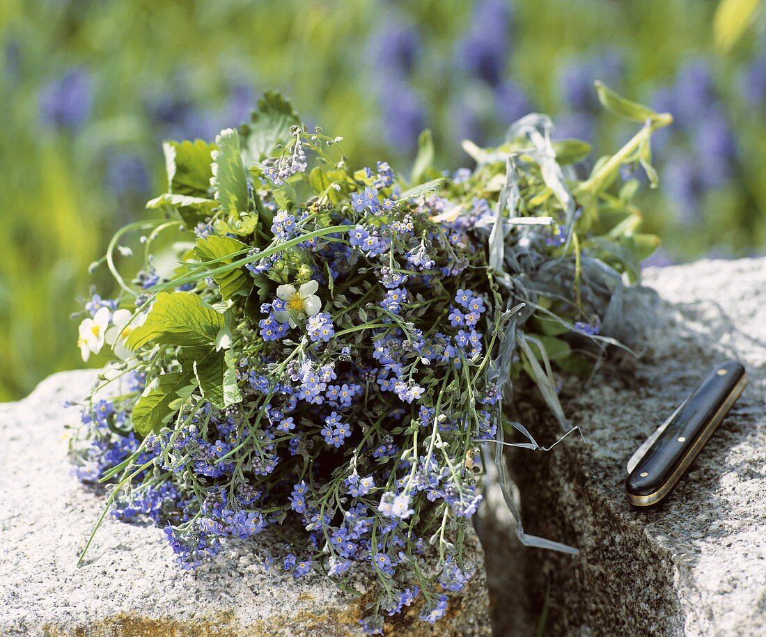 Bunch of wild flowers on stones with penknife