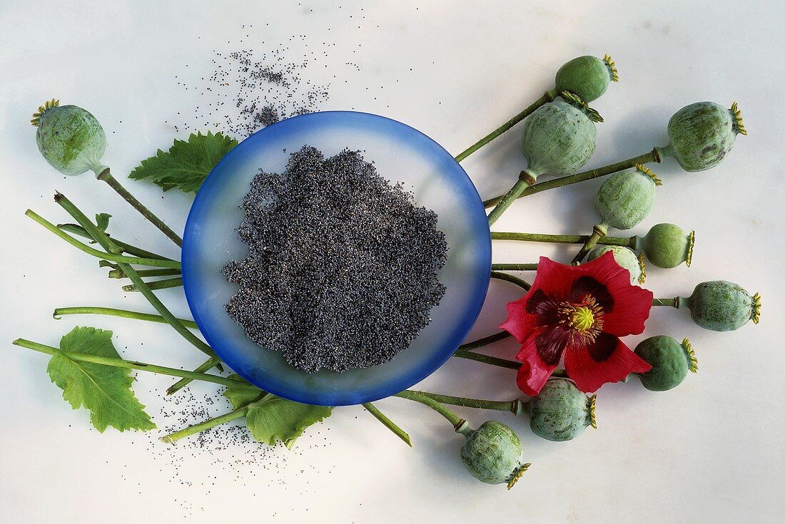 Plate of poppy seeds, poppy seed heads and flower