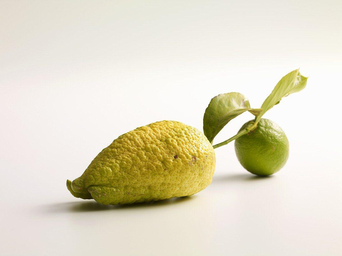 Lemons with stalk and leaf
