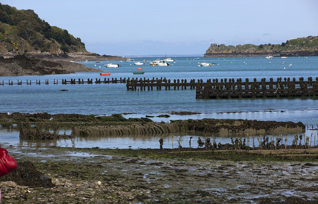 Oyster beds near Ebbe in Cancale (Brittany)