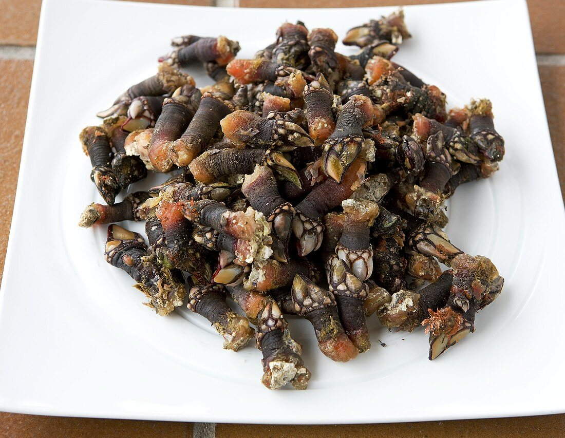 Fresh goose barnacles from Malpica, Spain