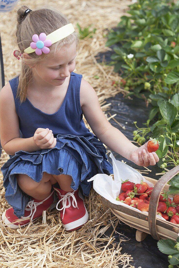 A blonde girl picking strawberries