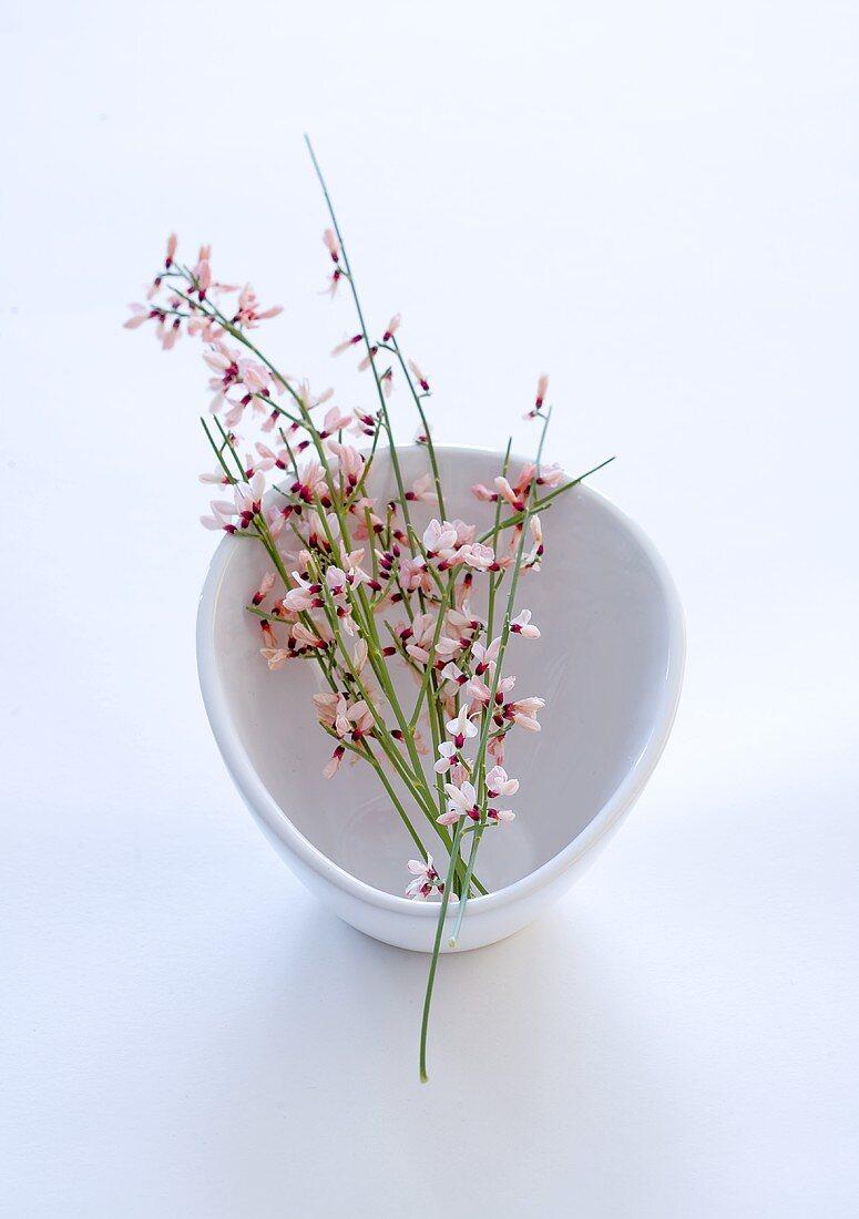 Furze sprigs in a bowl