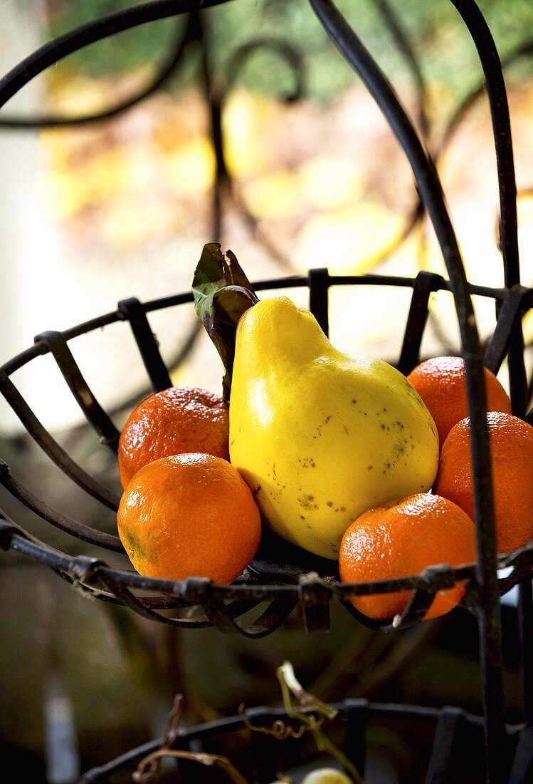 Clementines and quince in wire basket
