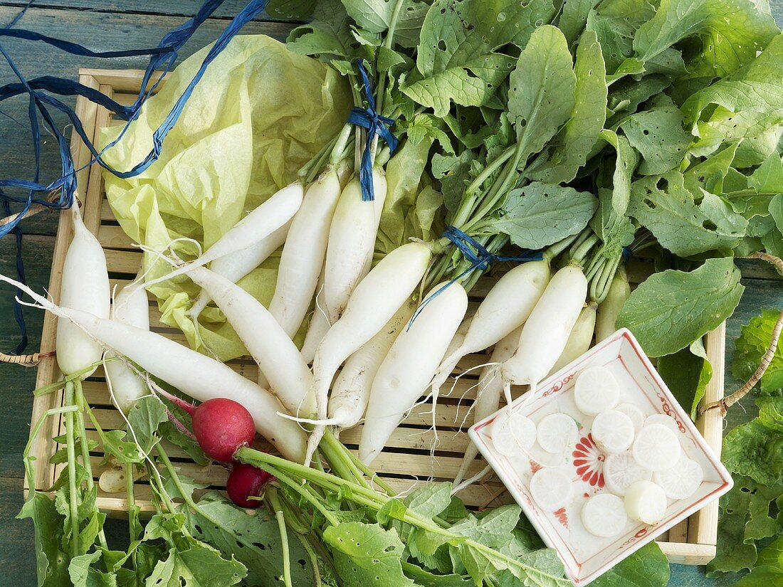 White and red radishes