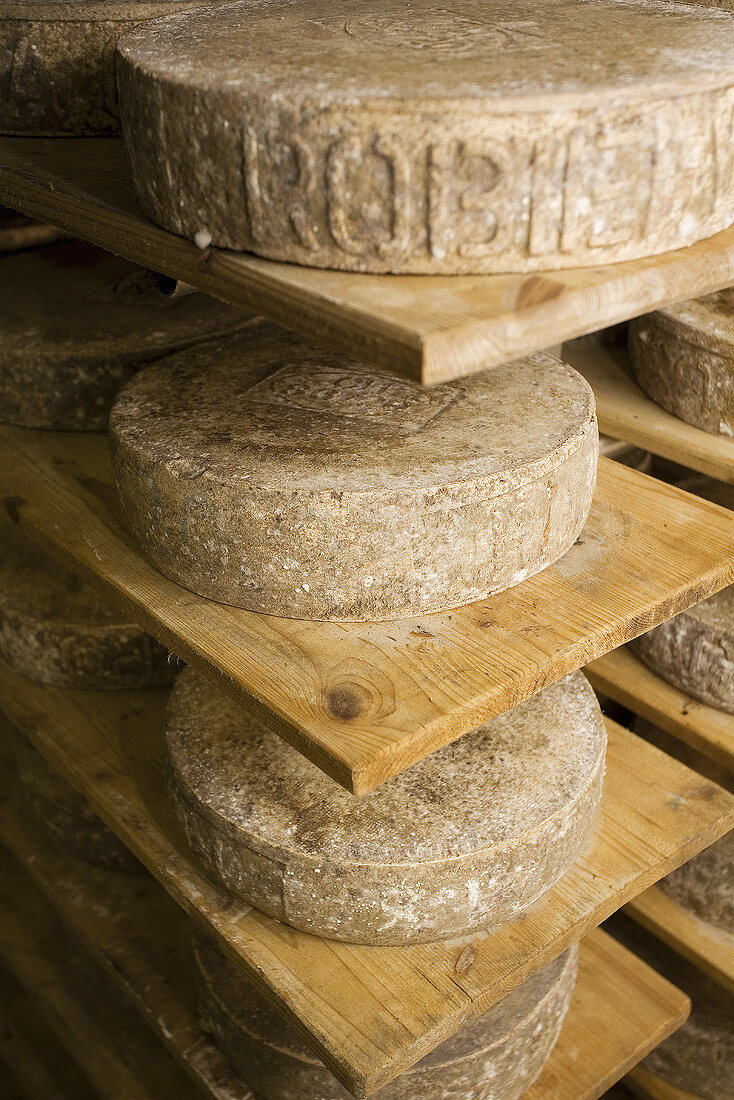 Alpine cheese made from cow's & goat's milk (Maggia Valley, CH)