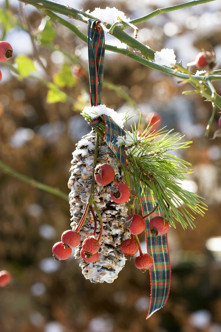 Spruce cone filled with bird food