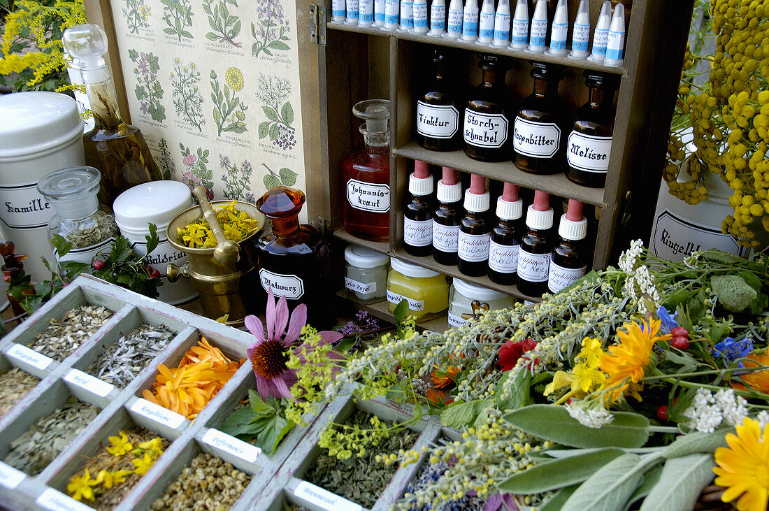 Various fresh and dried herbs (Herbal apothecary's shop)