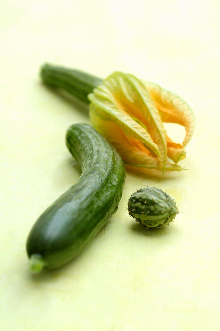 Cucumber, bitter gourd and courgette flower