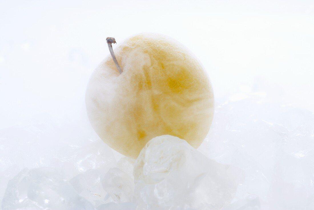 Frozen yellow plum on ice