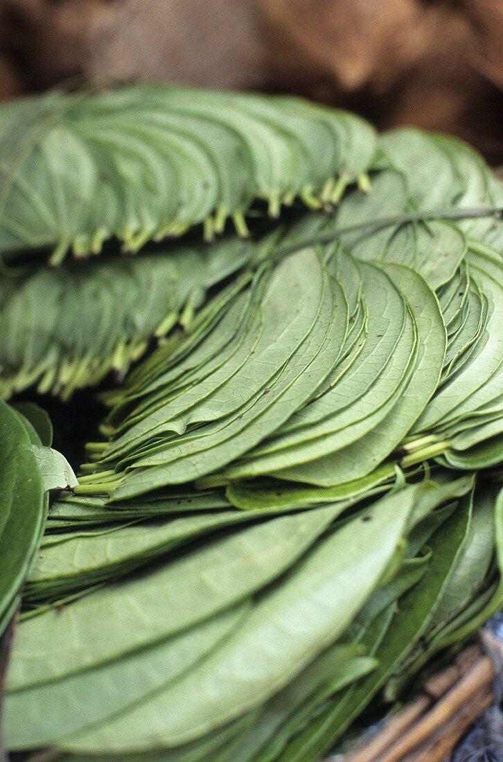 Paan (Betel) leaves (India)