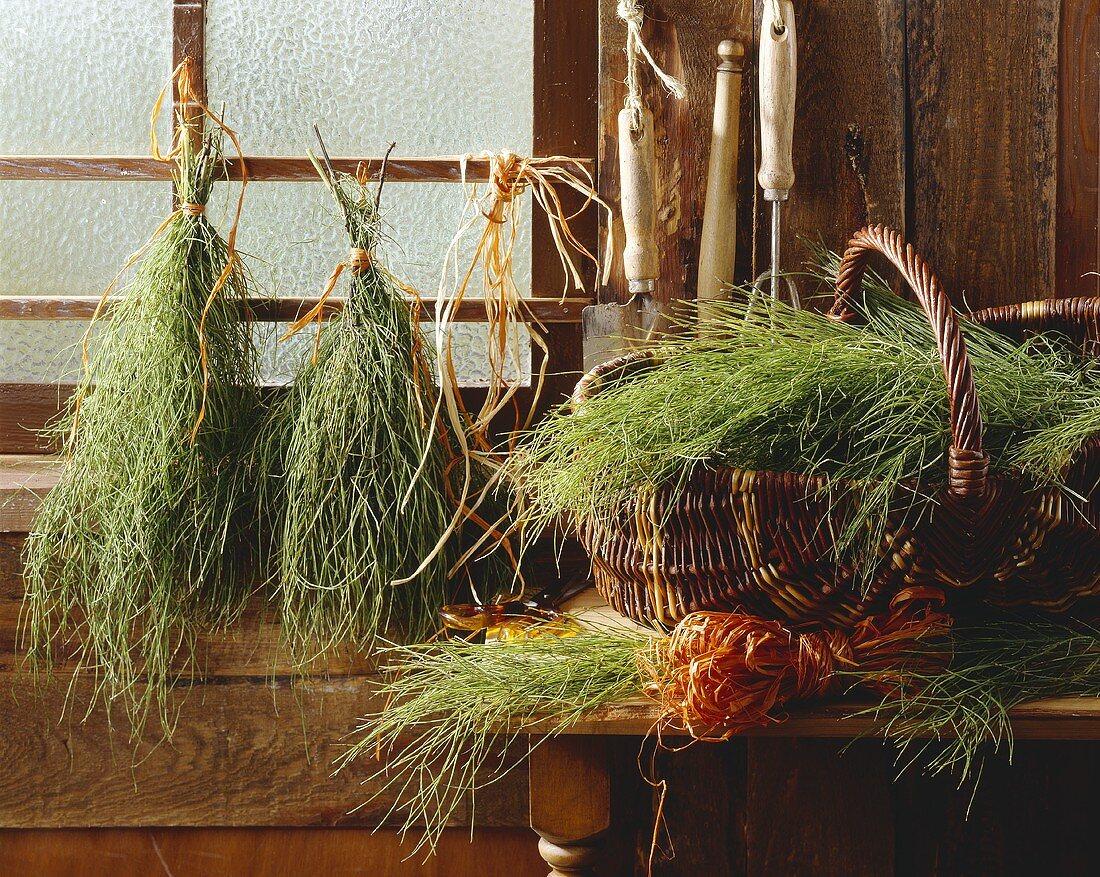 Ackerschachtelhalm in der Gartenlaube zum Trocknen