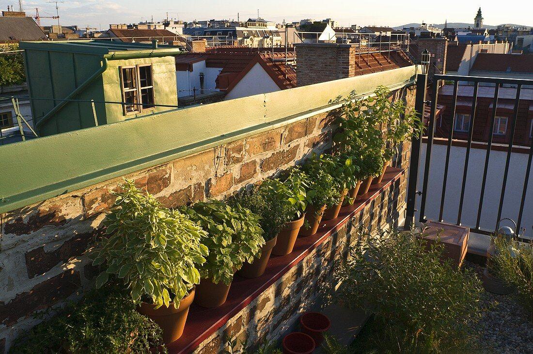 Pots of herbs on a balcony