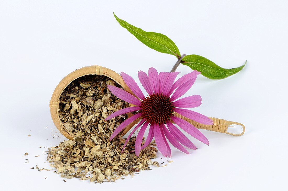 Echinacea tea (dried roots) and purple coneflower