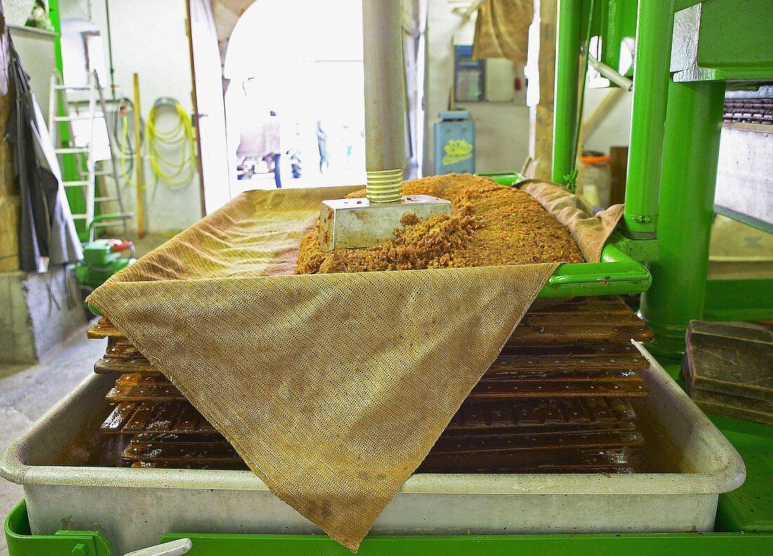 Pressing apple pulp in a cider press
