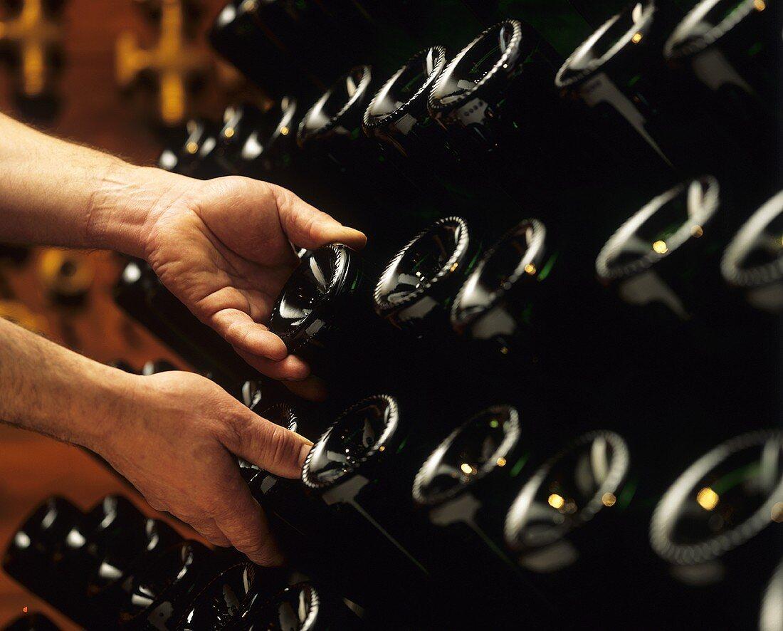 Champagne bottles in pupitre (riddling rack)