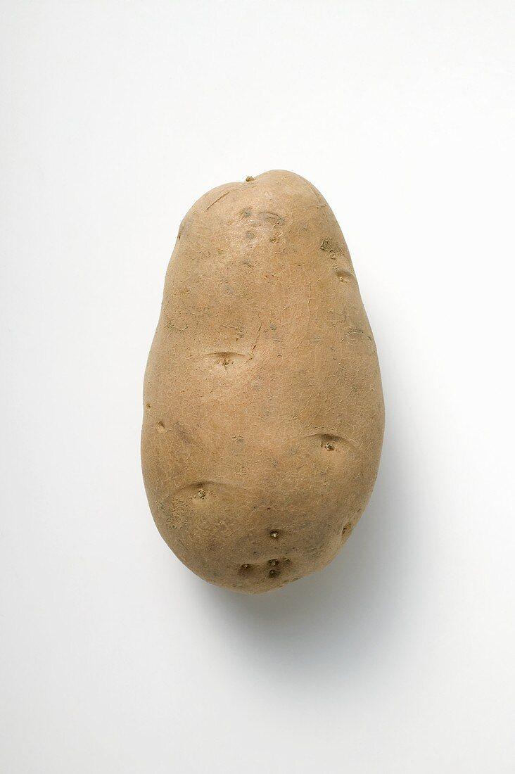 Cilena, a firm-cooking potato