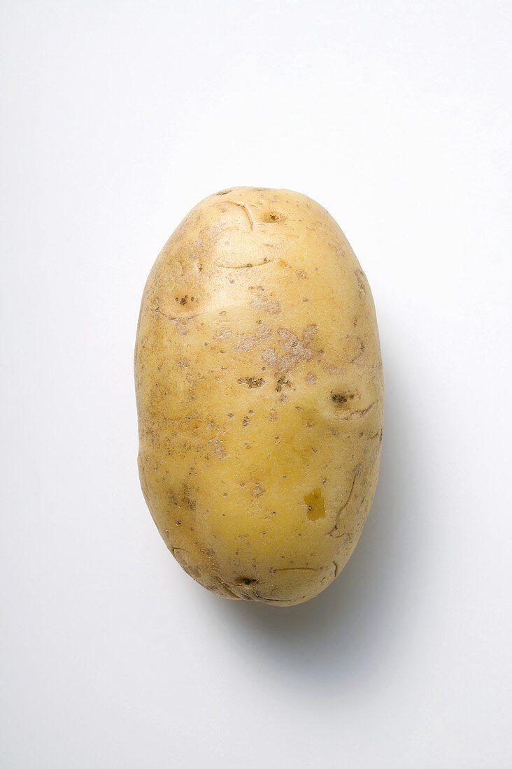 Nicola, a waxy potato