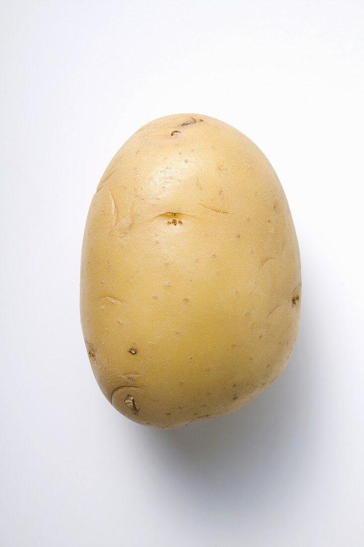 Secura, a waxy potato