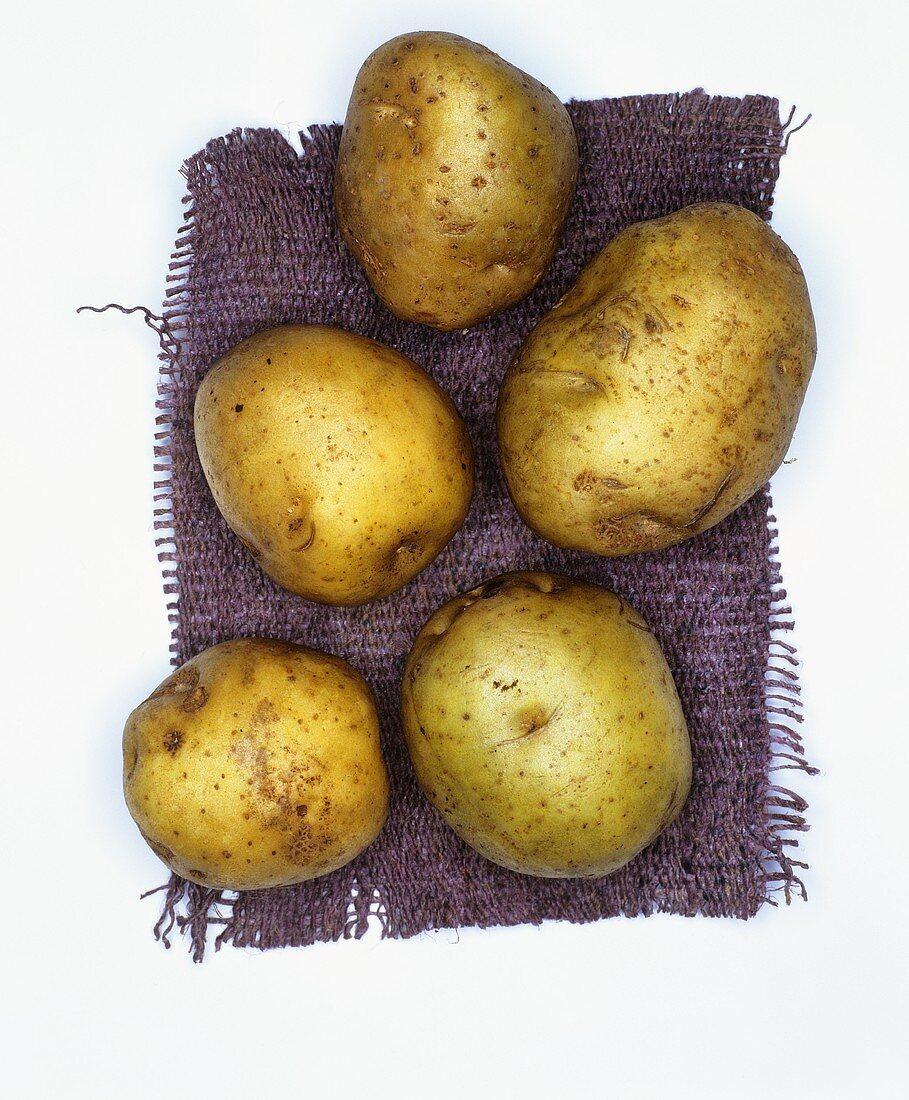 Potatoes, variety: Ackersegen