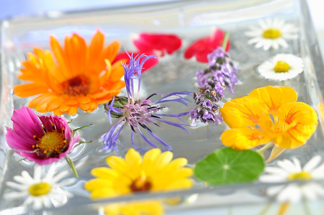 Edible flowers in a bowl of water