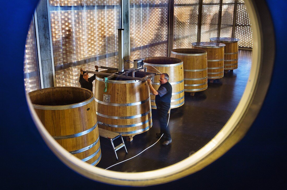 Red wine making, Gantenbein Winery, Fläsch, Graubünden, Switzerland