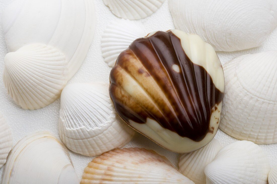 Sea shells with Belgian chocolate sea shells