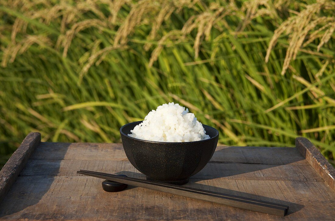 A bowl of rice in front of a rice paddy
