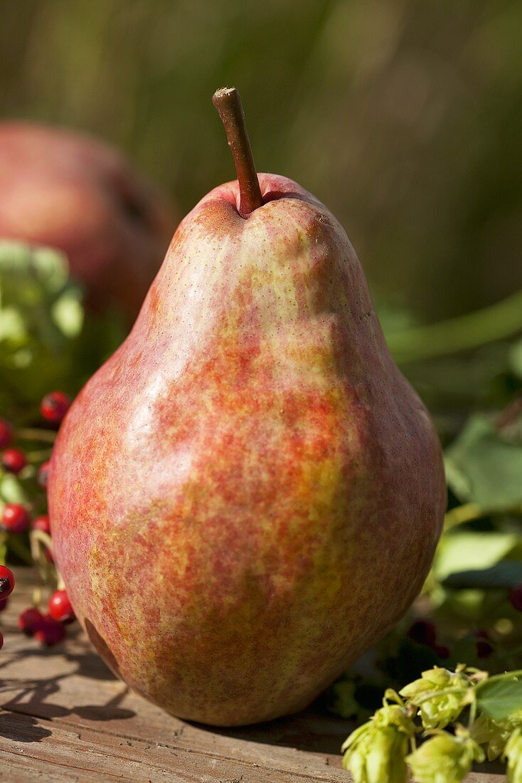 A red Williams pear