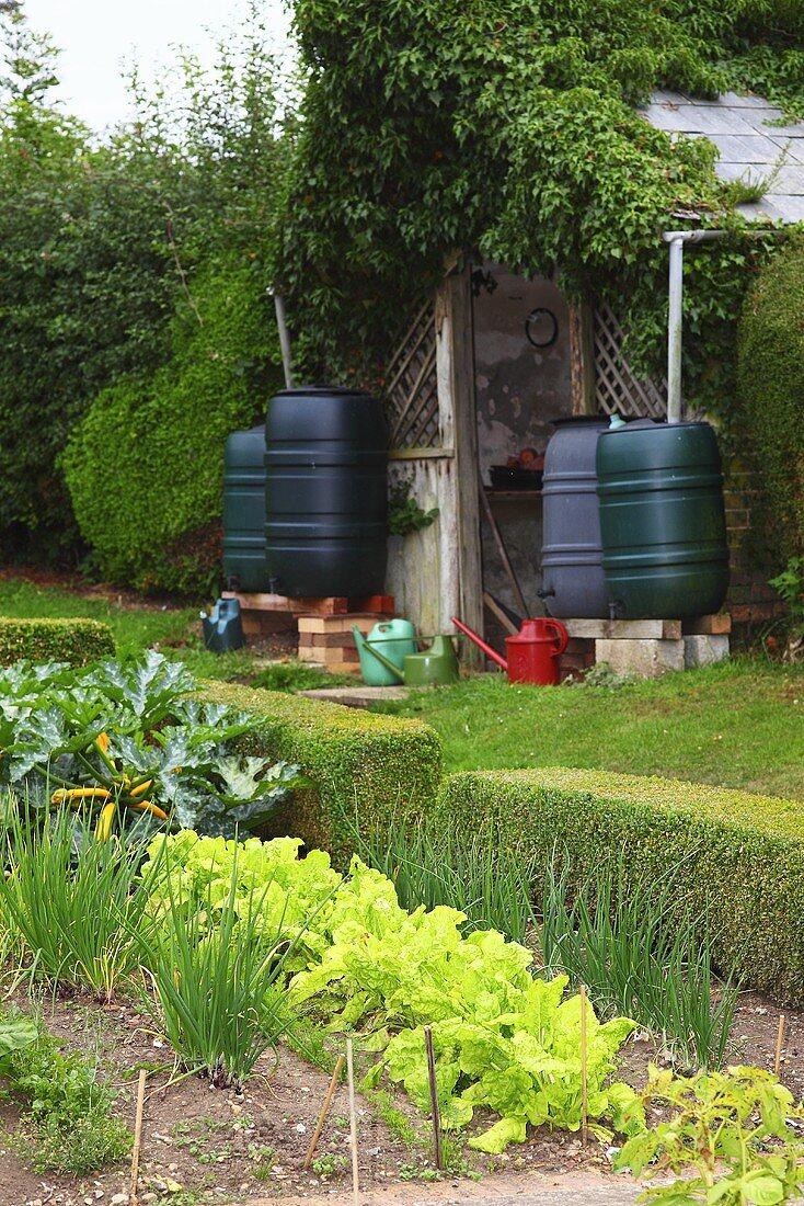 A vegetable garden in England