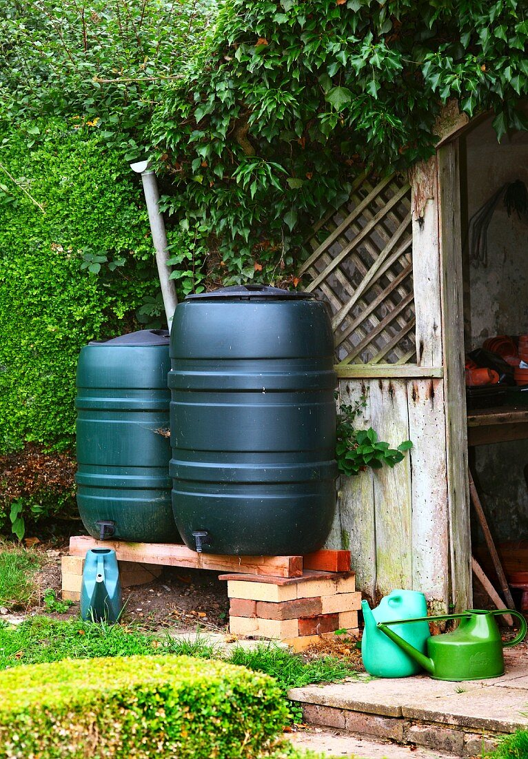 Water butts in front of a shed in England