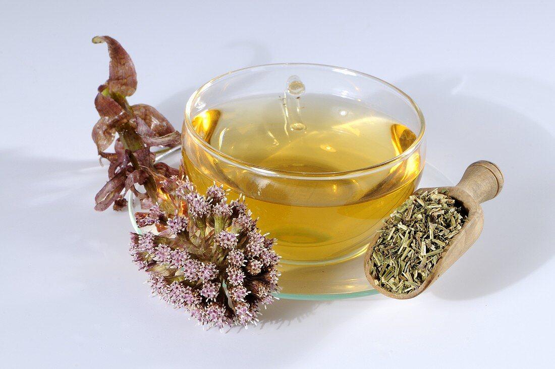 Common butterbur tea (petasites hybridus)