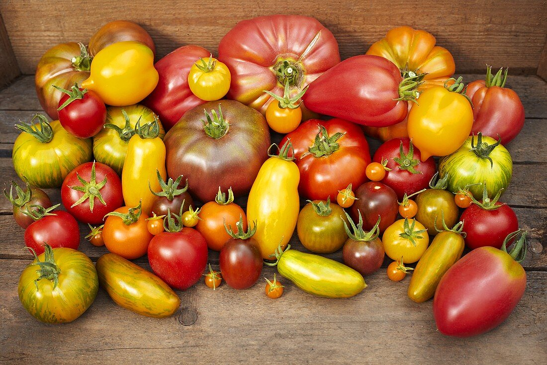 A display of various types of organic tomatoes