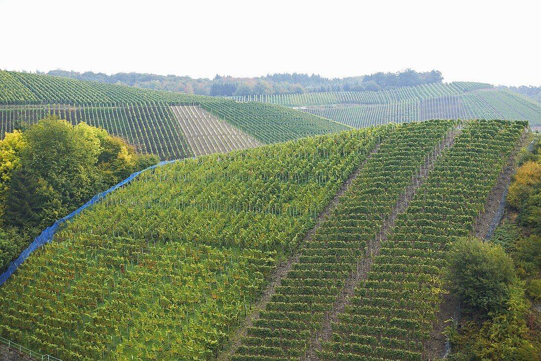 Vineyards (Ahr)