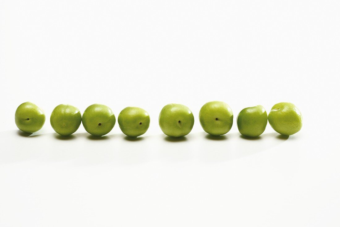 Green plums (variety: Canerik, Turkish plums) in a row